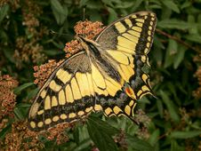 Free Butterfly, Moths And Butterflies, Brush Footed Butterfly, Insect Stock Images - 100331644