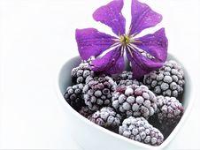 Free Purple, Violet, Fruit, Superfood Royalty Free Stock Image - 100332866