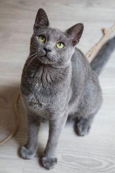 Free Cat, Mammal, Small To Medium Sized Cats, Cat Like Mammal Stock Photography - 100333272
