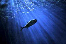 Free Water, Underwater, Marine Biology, Fish Royalty Free Stock Photography - 100335307