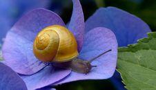 Free Snails And Slugs, Snail, Molluscs, Invertebrate Stock Photos - 100336303