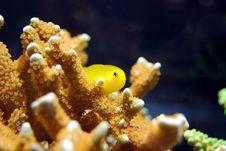 Free Coral, Marine Biology, Coral Reef, Underwater Stock Images - 100336974