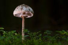 Free Mushroom, Fungus, Edible Mushroom, Agaricaceae Stock Image - 100340591