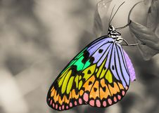 Free Butterfly, Moths And Butterflies, Monarch Butterfly, Insect Stock Images - 100341624