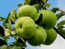 Free Fruit, Apple, Fruit Tree, Granny Smith Royalty Free Stock Images - 100342179
