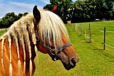 Free Horse, Halter, Bridle, Mane Stock Photo - 100342290