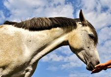 Free Horse, Mane, Sky, Fauna Stock Photos - 100342663