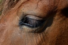 Free Eye, Mane, Nose, Close Up Stock Photo - 100342690