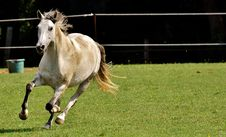 Free Horse, Mane, Horse Like Mammal, Pasture Stock Photography - 100345612