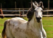 Free Horse, Mane, Horse Like Mammal, Fauna Stock Photo - 100345710
