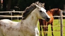 Free Horse, Horse Like Mammal, Mane, Stallion Stock Photos - 100345713