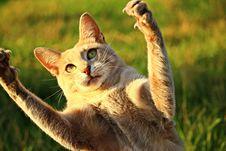 Free Cat, Fauna, Small To Medium Sized Cats, Cat Like Mammal Stock Image - 100346971
