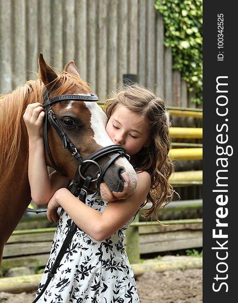 Horse, Horse Like Mammal, Horse Supplies, Bridle