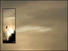 Free Nature Ecard By Bill Thomas Royalty Free Stock Photos - 100369528