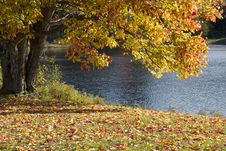 Free Tress Fall Autumn Royalty Free Stock Photo - 100369945