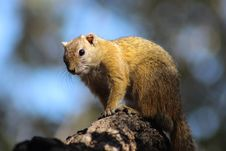 Free Fauna, Mammal, Rodent, Organism Stock Photo - 100380300