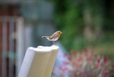 Free Bird, Fauna, Beak, Old World Flycatcher Stock Photography - 100382282
