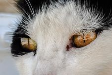 Free Cat, Whiskers, Face, Nose Royalty Free Stock Photo - 100382365