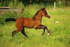 Free Horse, Ecosystem, Pasture, Horse Like Mammal Stock Photos - 100383403