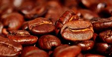 Free Jamaican Blue Mountain Coffee, Cocoa Bean, Caffeine, Bean Royalty Free Stock Photography - 100383587
