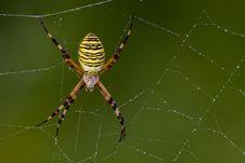 Free Spider, Arachnid, Orb Weaver Spider, Spider Web Stock Images - 100383894