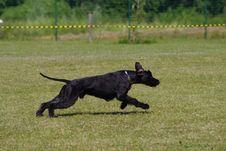Free Dog Like Mammal, Dog, Dog Breed, Grass Stock Photography - 100387652