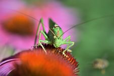 Free Insect, Nectar, Macro Photography, Flower Royalty Free Stock Photos - 100387898