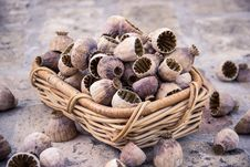 Free Tree Nuts, Walnut, Cockle, Nut Stock Image - 100388071