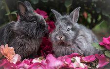 Free Rabbit, Mammal, Rabits And Hares, Domestic Rabbit Royalty Free Stock Photography - 100388687