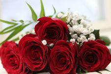 Free Flower, Rose, Rose Family, Garden Roses Stock Photos - 100397163