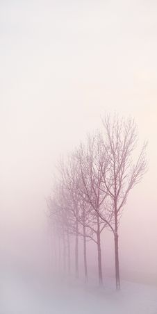 Free Fog, Winter, Sky, Tree Stock Image - 100397211
