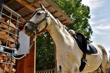 Free Horse, Bridle, Rein, Horse Tack Royalty Free Stock Photography - 100397427
