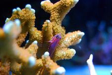 Free Coral, Coral Reef, Reef, Marine Biology Stock Photography - 100398392