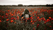 Free Flower, Red, Field, Plant Royalty Free Stock Photography - 100398477