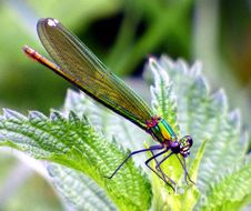 Free Insect, Damselfly, Dragonfly, Dragonflies And Damseflies Stock Images - 100398514