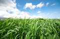 Free Green Grass Under Blue Sky Royalty Free Stock Photo - 10046675