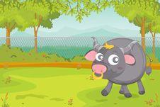 Free Buffallo Stock Image - 10043731