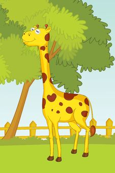 Free Giraffe Stock Photo - 10043910