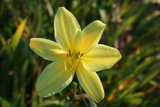 Free Yellow Flower Stock Image - 10044431