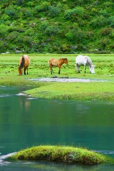 Free Three Horses On The Riverside Royalty Free Stock Images - 10045439