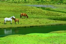 Free Three Horses On The Riverside Royalty Free Stock Photo - 10045465