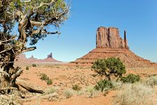 Free Pine At Monument Valley Royalty Free Stock Photo - 10046215
