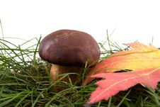 Free Mushroom On A Grass Royalty Free Stock Image - 10046976