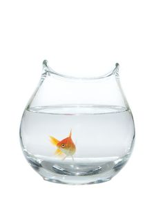 Free Goldfish Royalty Free Stock Photos - 10047128