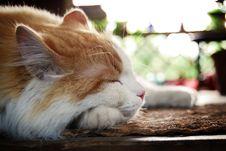 Typical Cat Stock Photos