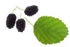 Mulberries And Leaf Stock Image