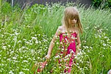 Free In The Meadow Stock Photos - 10049913