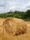 Free Single Haycock On The Field. Royalty Free Stock Photography - 10059947