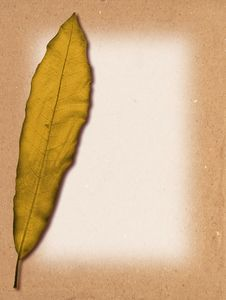 Free Leaf Texture Royalty Free Stock Image - 10050286