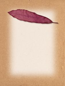 Free Leaf Texture Royalty Free Stock Image - 10050336